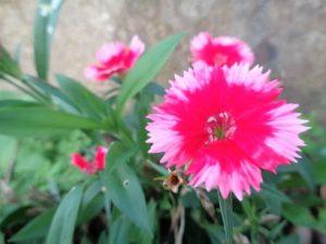 園芸で育てた花