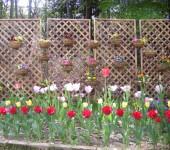 中庭のお花畑